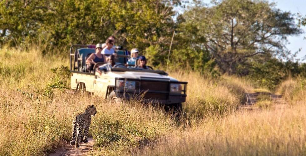 Safari i Krugerparken i Sydafrika