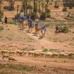 kamelridning i Atlasbergen